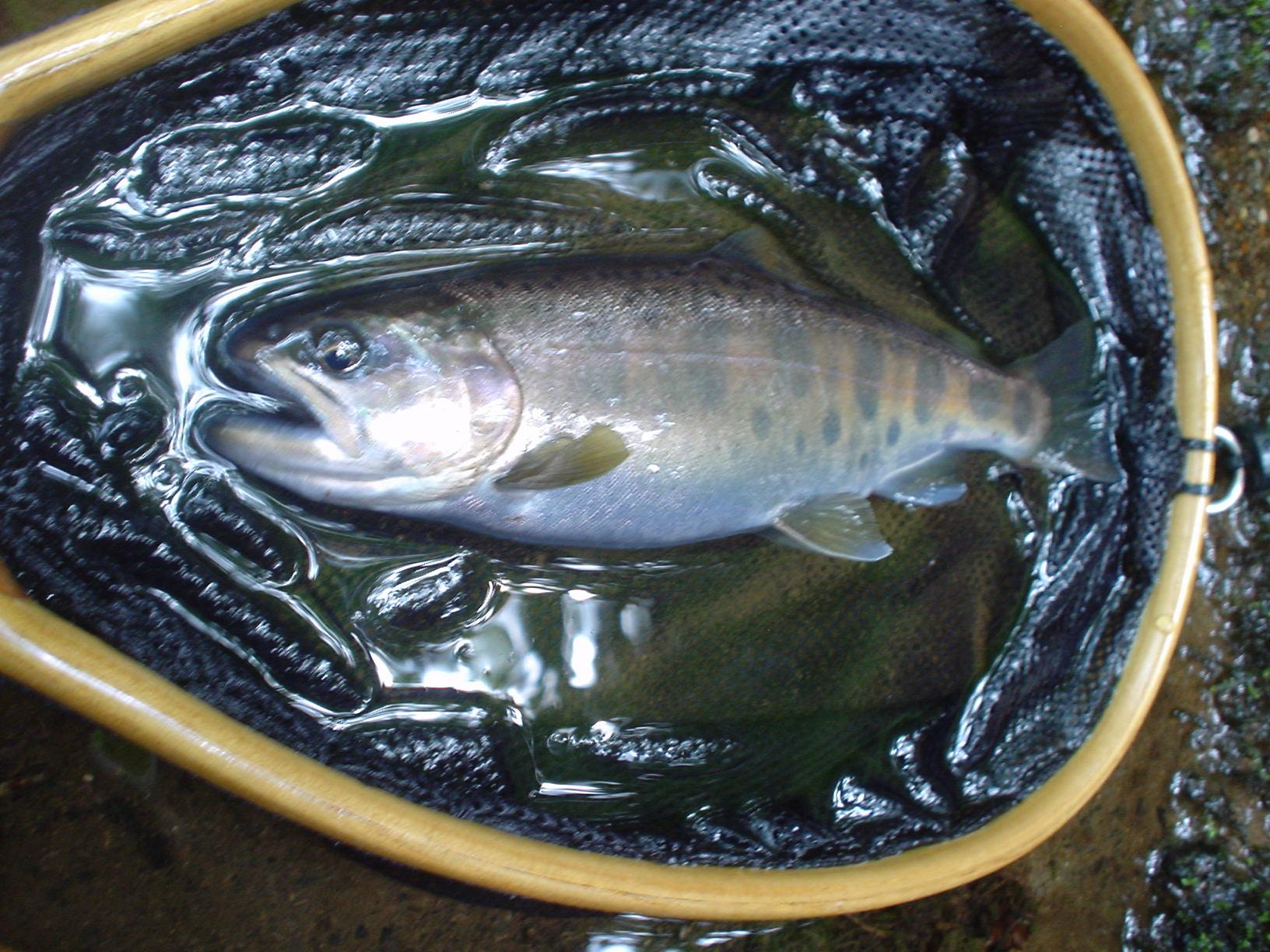 8月21日(金)の釣り日記_f0280717_20134260.jpg