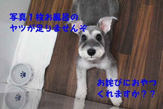 b0130018_210725.jpg