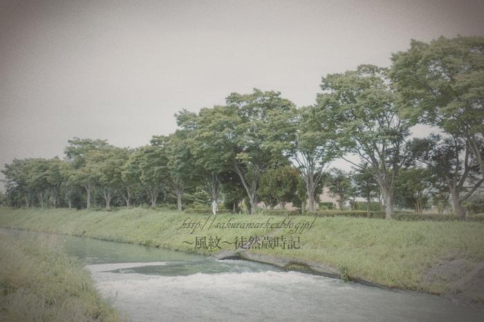 真夏のゆうゆう散歩。_f0235723_2026466.jpg