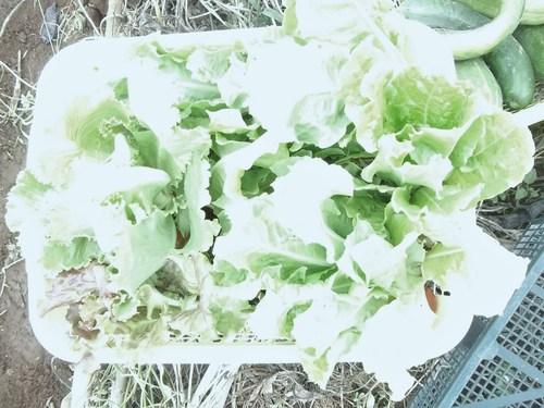 秋冬野菜..気合を入れないと!_b0137932_1747198.jpg