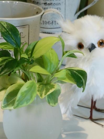 植物たちの今~ペペロミア_f0255704_12195419.jpg