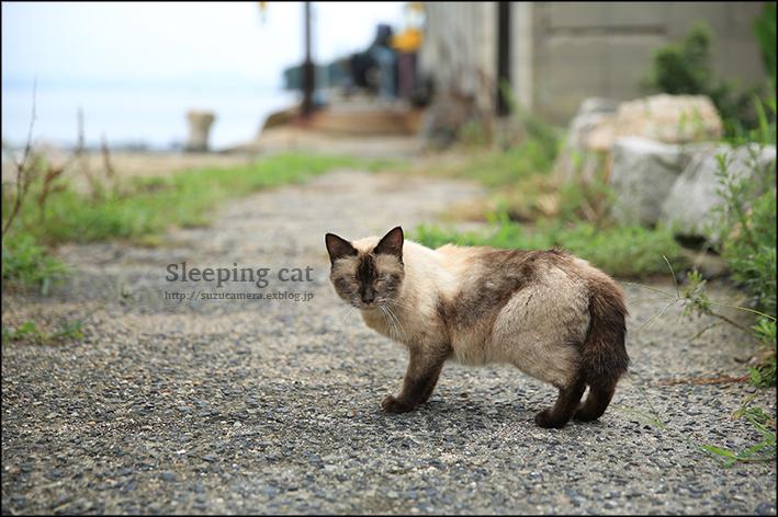眠り猫_f0100215_00334413.jpg