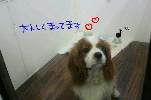 b0130018_00113772.jpg
