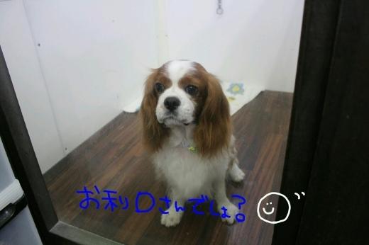 b0130018_00114139.jpg