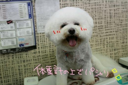 b0130018_00115527.jpg