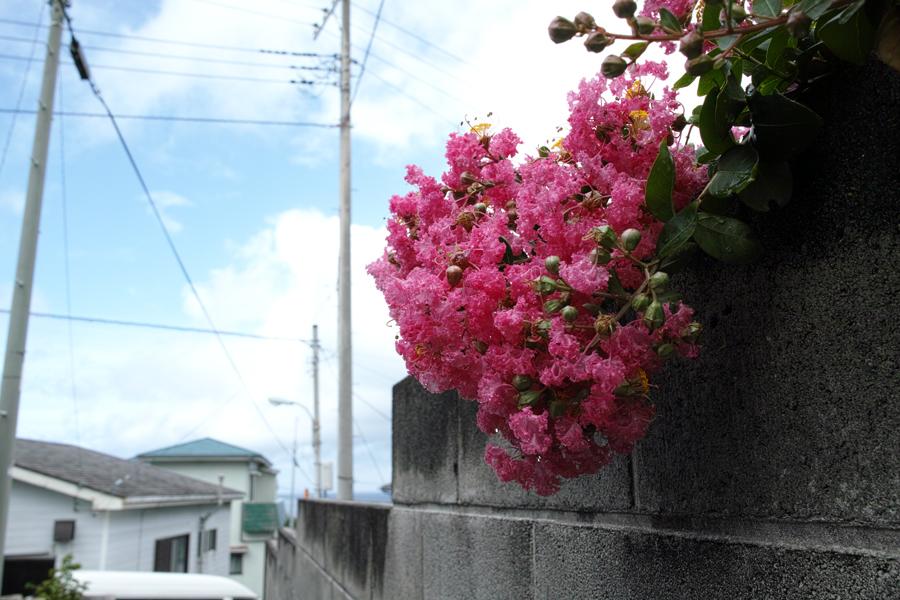 神津島特集⑥ 島のスナップ 街並みを中心に_c0223825_15142718.jpg