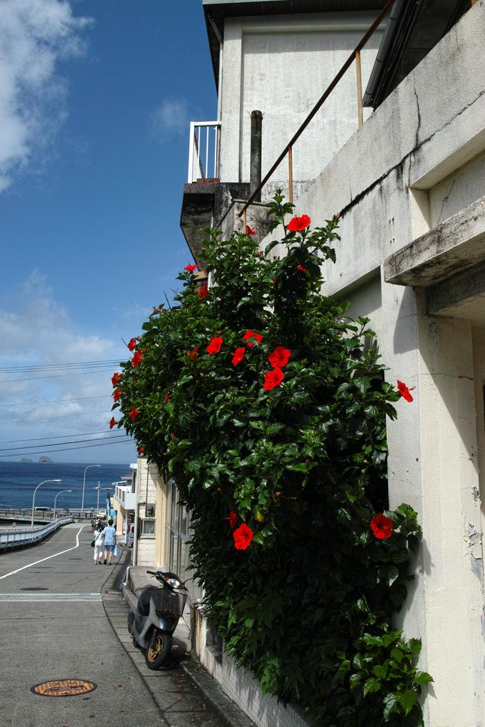 神津島特集⑥ 島のスナップ 街並みを中心に_c0223825_15185381.jpg