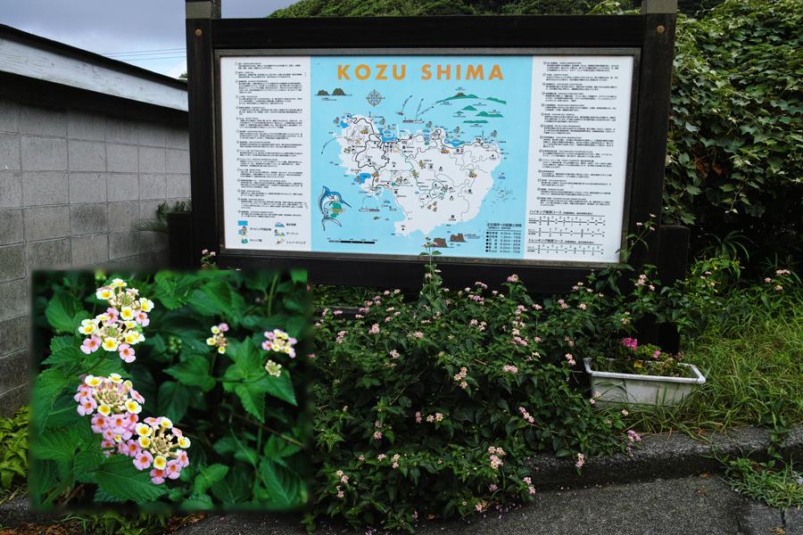 神津島特集⑥ 島のスナップ 街並みを中心に_c0223825_15272323.jpg