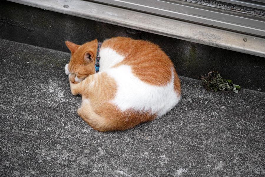 神津島特集⑥ 島のスナップ 街並みを中心に_c0223825_16462167.jpg