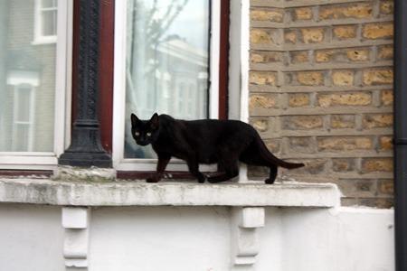 猫が住んでいる町_b0199526_2325347.jpg