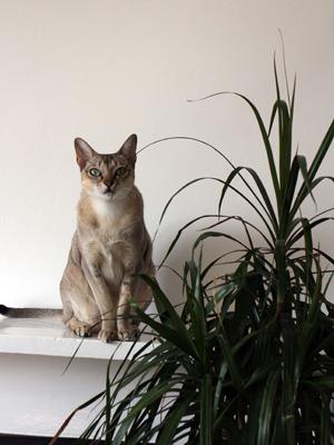 猫が住んでいる町_b0199526_2330783.jpg