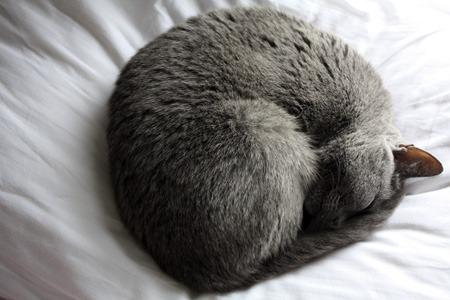 猫が住んでいる町_b0199526_23321688.jpg