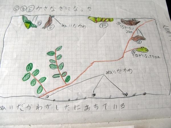 夏休み 自由研究_f0129726_21283861.jpg