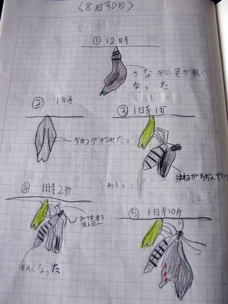 夏休み 自由研究_f0129726_21292959.jpg