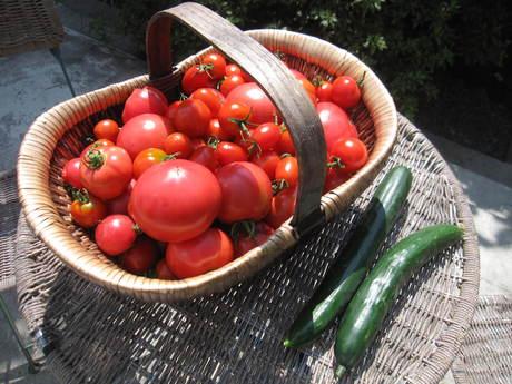 ポタジェのトマトでまたまたトマトソース作り_a0279743_19594941.jpg