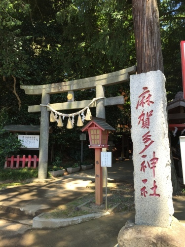 摩賀田神社 大杉_f0184247_07482999.jpg