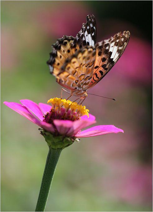 庭の花に・・・・_a0256349_17514077.jpg