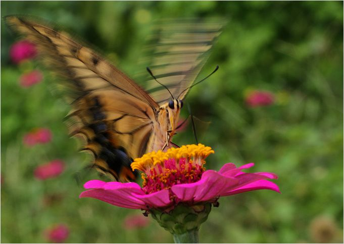 庭の花に・・・・_a0256349_1752032.jpg