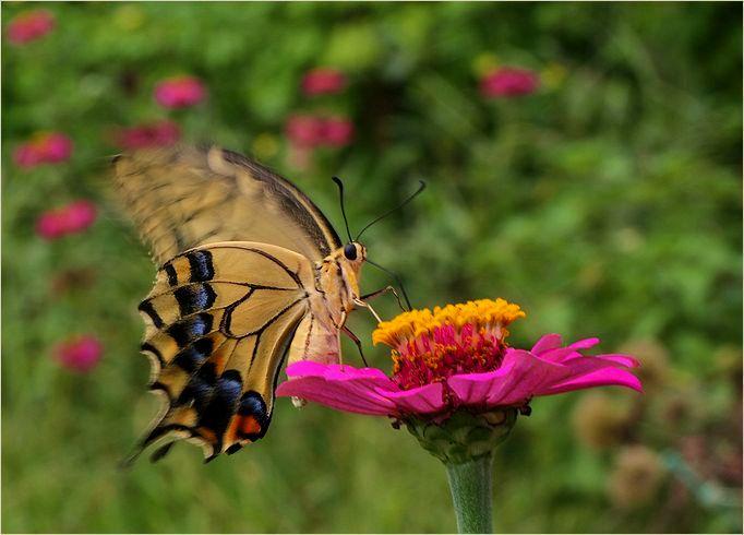 庭の花に・・・・_a0256349_1752829.jpg