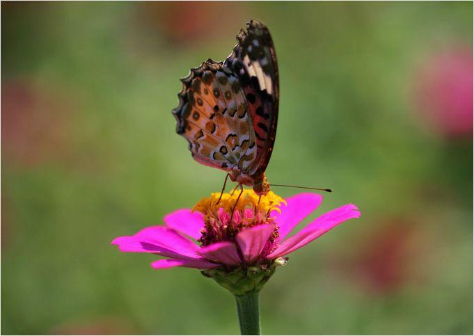 庭の花に・・・・_a0256349_1811995.jpg