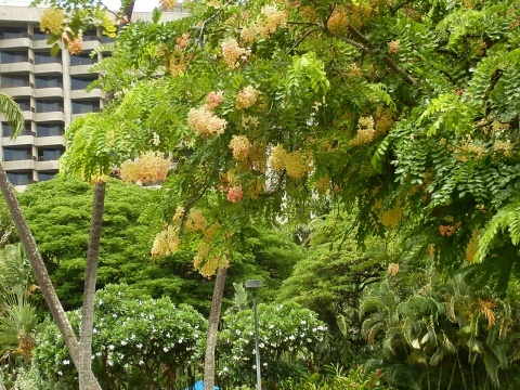 ◆ハワイへ・・・プルメリア&お買い物_e0154682_00264338.jpg