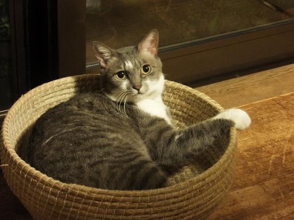 地域猫の話とルナの話_c0115596_22375753.jpg