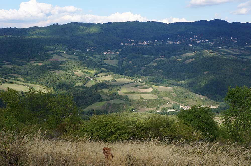 山の上まで散歩に行こう_f0106597_21342088.jpg