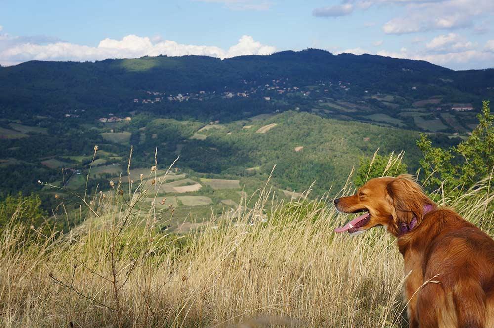 山の上まで散歩に行こう_f0106597_2135776.jpg