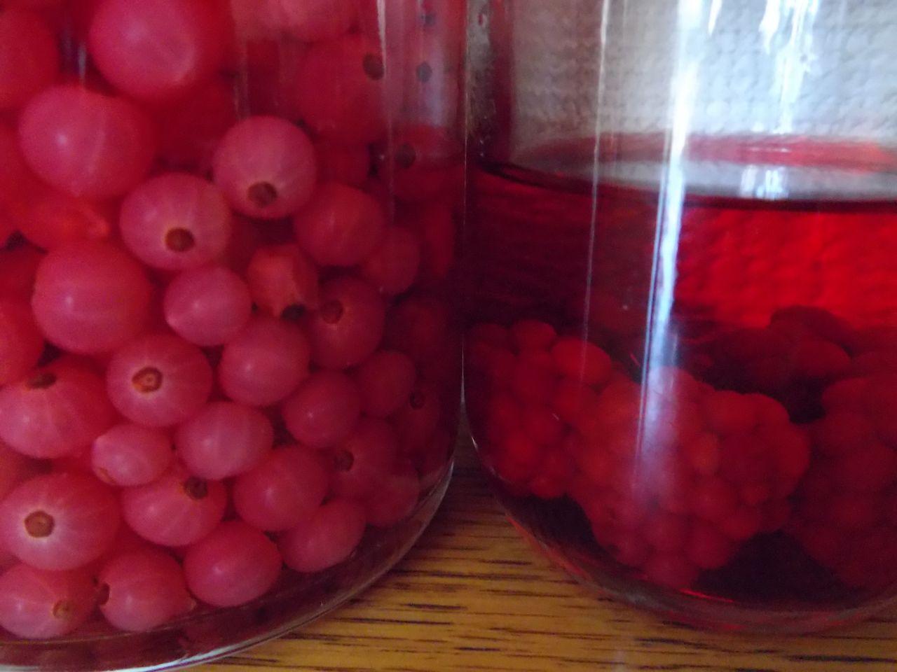 咲き出した巨大オオケタデと不思議な果実酒の色_c0025115_22164987.jpg
