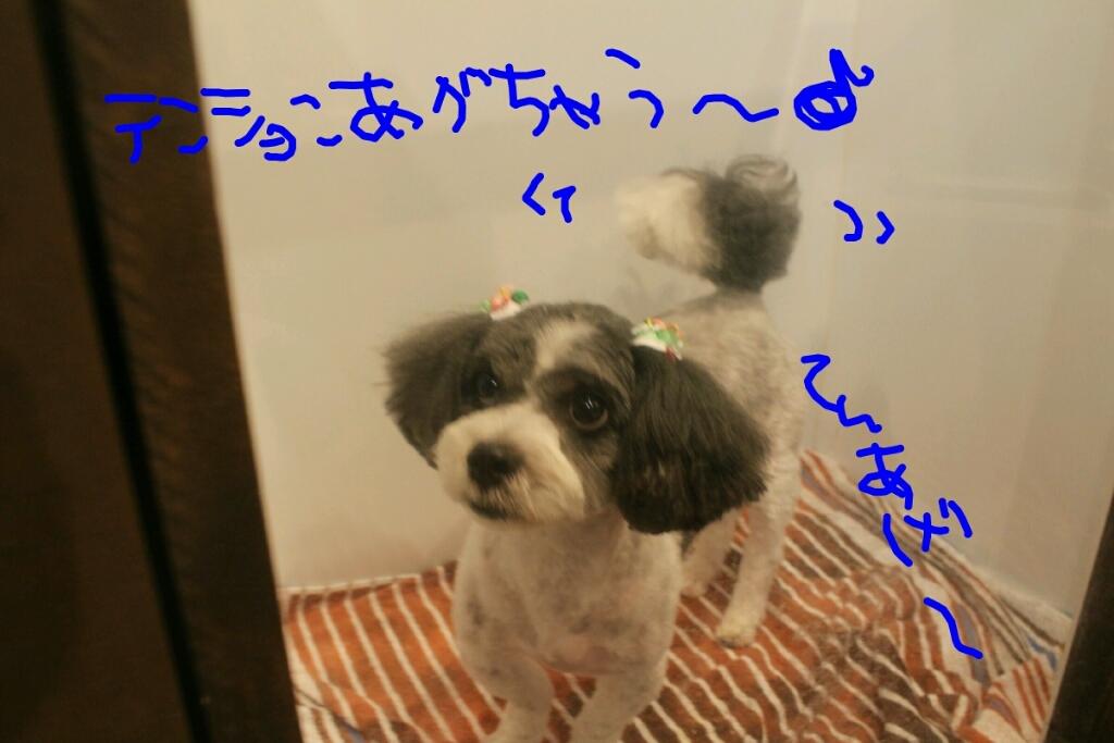 b0130018_21071148.jpg