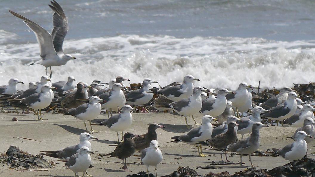 浜 辺 の 風 景 No.30_d0039021_18345158.jpg