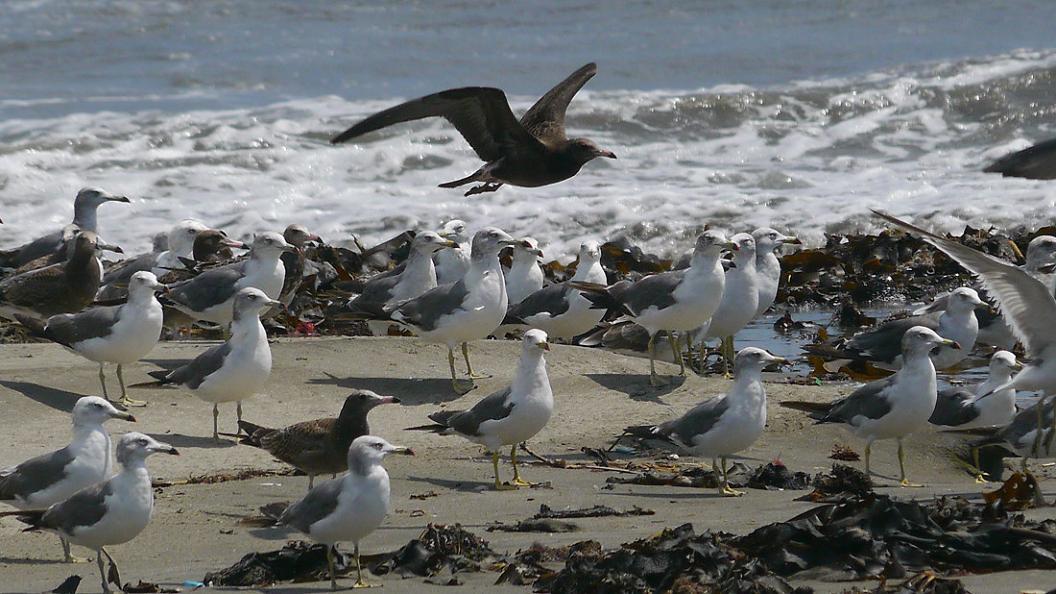 浜 辺 の 風 景 No.30_d0039021_18345897.jpg