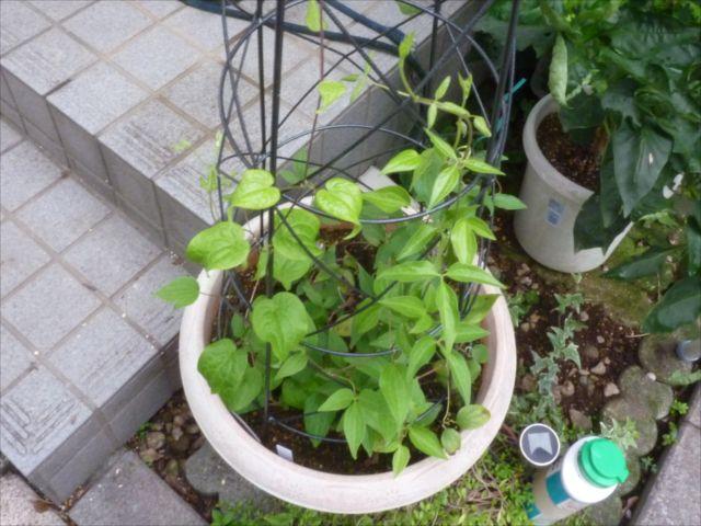 小さい庭_f0032332_18262119.jpg