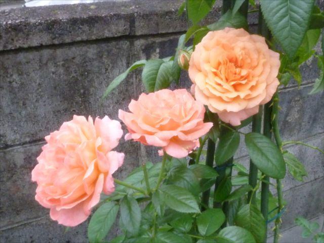 小さい庭_f0032332_1826326.jpg