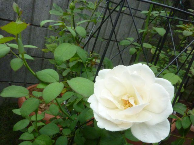 小さい庭_f0032332_1826956.jpg