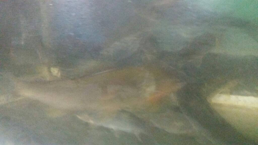 8月23日  河川状況。_c0266737_18343364.jpg