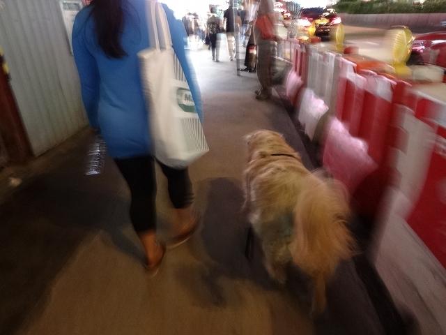 犬の散歩_b0248150_06153021.jpg