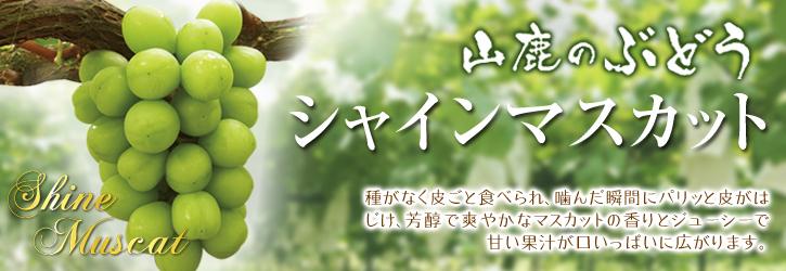 熊本ぶどう 社方園 第8回ぶどう祭り その2_a0254656_17511626.jpg