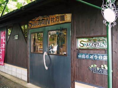 熊本ぶどう 社方園 第8回ぶどう祭り その2_a0254656_18141942.jpg