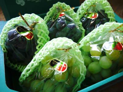 熊本ぶどう 社方園 第8回ぶどう祭り その2_a0254656_19324634.jpg
