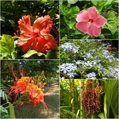 ◆ハワイへ・・・プルメリア&お買い物_e0154682_15513772.jpg