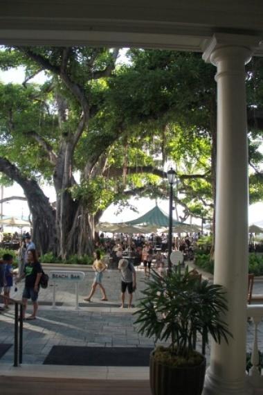 ◆ハワイへ・・・プルメリア&お買い物_e0154682_18303346.jpg