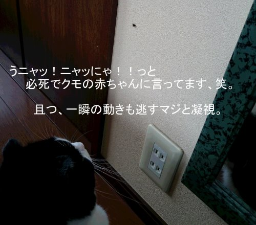 b0157386_1593195.jpg