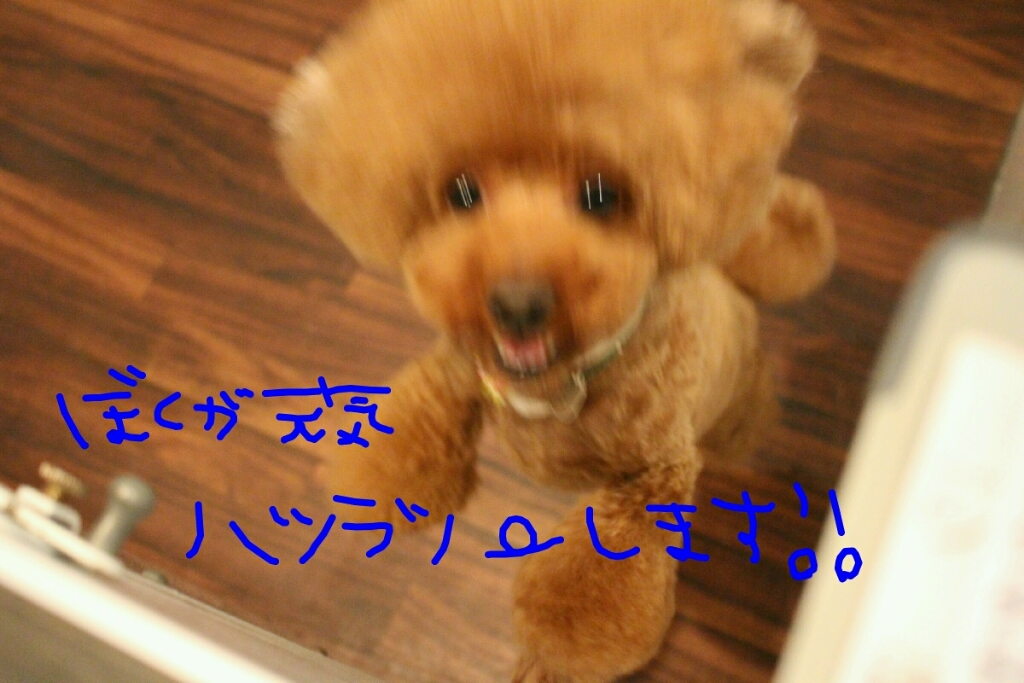 b0130018_00035027.jpg