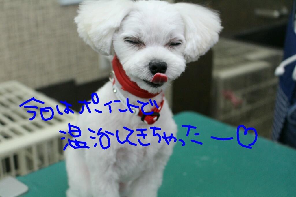 b0130018_01073216.jpg