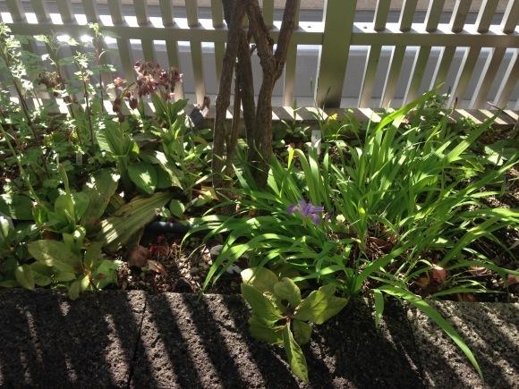 ベランダ茶花園 掲載協力しました。_d0334837_00073975.jpg