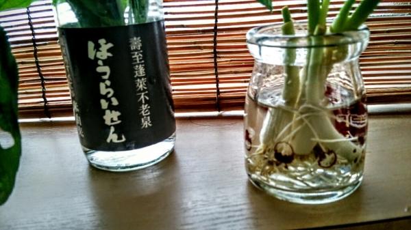 朝積みバジルと ゴーヤのこと_e0348754_14052178.jpg