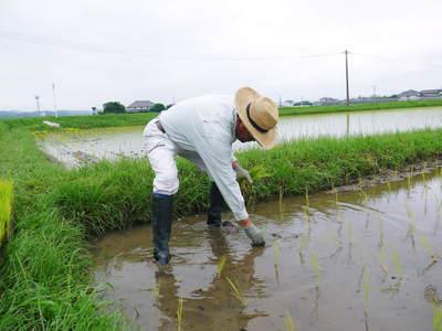 無農薬の『雑穀米』、『発芽玄米』の販売に向けて! その1_a0254656_19251771.jpg