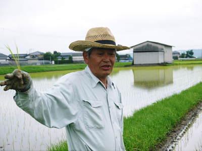 無農薬の『雑穀米』、『発芽玄米』の販売に向けて! その1_a0254656_1928711.jpg