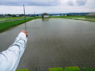 無農薬の『雑穀米』、『発芽玄米』の販売に向けて! その1_a0254656_1930211.jpg